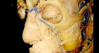 4D Anatomy пропонує інноваційний метод вивчення людського тіла