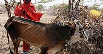 Исламисты допустили гуманитарные организации в Сомали