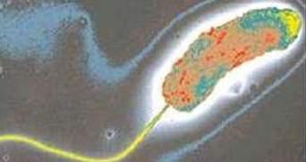 У Маріуполі зареєстрований новий випадок вібріононосія холери