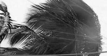 """Жертвами урагана """"Айрин"""" стали уже 10 человек"""