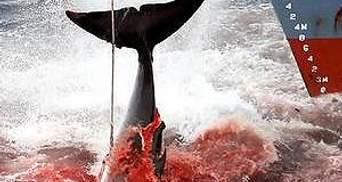 Новая Зеландия выразила протест против охоты на китов