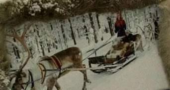 В Финляндии туристам предлагают поездку на оленях