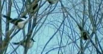"""Телевидение КНДР показало птиц """"оплакивающих"""" Ким Чен Ира"""
