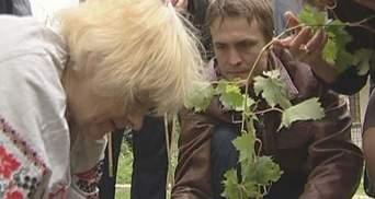 На Андреевском спуске высадили виноград из Монмартра