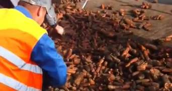 "Губернатор Сумщини ""тролить"" Яценюка тоннами моркви (Відео)"