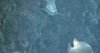 Огромный акулий океанарий откроют в Монако