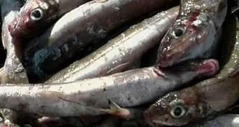 """Витоки радіаційної води """"вбили"""" риболовецький бізнес у Фукусімі"""