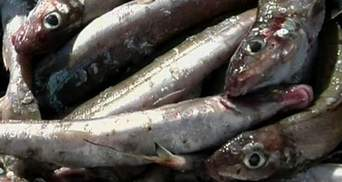 """Утечки радиационной воды """"убили"""" рыболовный бизнес в Фукусиме"""