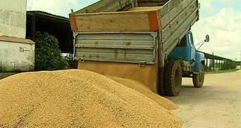 Зернові та олійні культури в Україні подешевшали майже на третину