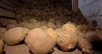 У подорожчанні картоплі Присяжнюк звинуватив спекулянтів