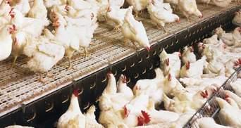 Росія не пропустила українську курятину в Узбекистан