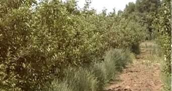 На закладення нових садів виділять 100 млн гривень