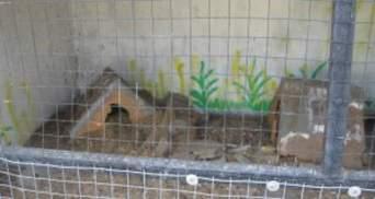 Розгромлений зоопарк у Луганську: тварини втекли у місто або сидять під уламками (Фото)