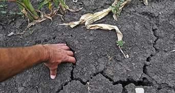 На Крим звалилось ще одне нещастя — через нестачу води пропало 50% врожаю