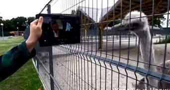 Страусам з Межигір'я показали інтерв'ю Януковича