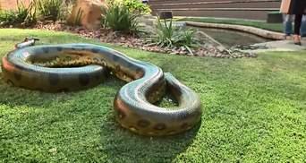 У Африці показали найстаршу анаконду