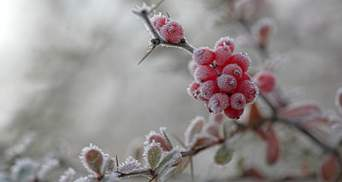 В Украину идет сильное похолодание с заморозками