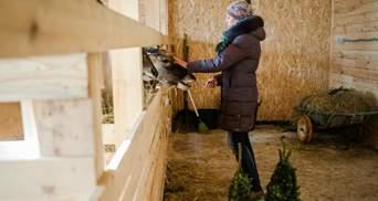 Як непродані ялинки стали святом для звірів Януковича
