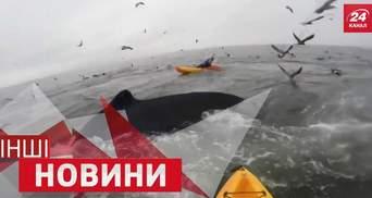 ДРУГИЕ новости. Неожиданные киты. Экстремальный паркур