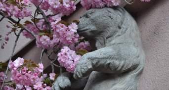 Город на Закарпатье стал розовым: Москаль похвастался удивительными фото