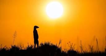 Краса дикої Африки: фантастичні фотографії переможця міжнародного конкурсу