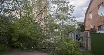 Ураган в Москве унес жизнь украинца