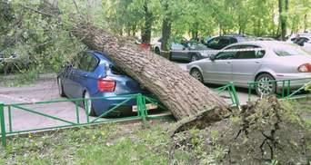Ураган у Москві: у Путіна наразі не бажають шукати винних у загибелі людей