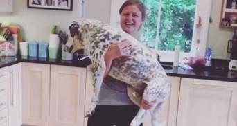 В сети сходят с ума от нового флешмоба: приседания со своими собаками