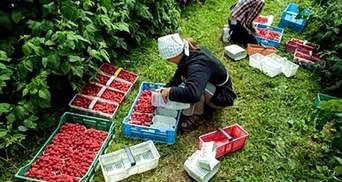 В Польше вводят налог на сезонных рабочих из Украины