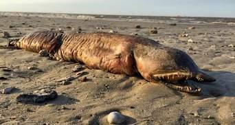 Ученые распознали устрашающее существо, которое выбросило на берег США