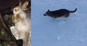 Мороз до -56: звери мгновенно замерзли от аномального холода в Казахстане, есть видео