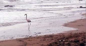 На пляж в Крыму прилетел розовый фламинго: фото