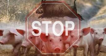 Чума свиней: на границе Польши с Украиной усилили таможенный контроль