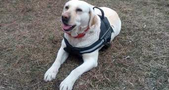 Службовий пес блискавично знайшов зниклого хлопчика у Краматорську