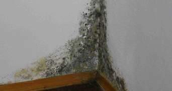 У Харкові люди з вадами зору живуть у плісняві у напівзруйнованих стінах