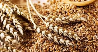 Максим Мартынюк: экспорт зерновых стабильно пополняет казну