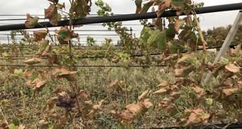 Крестьяне на Херсонщине начали выбрасывать овощи, которые покрылись ржавчиной