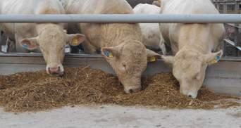 """""""Укрлендфарминг"""" Бахматюка: антибиотики в животноводстве должны контролироваться государством"""