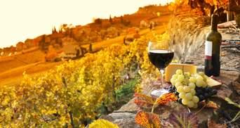 Чи дасть виноробство України мільярдний податок: думка експерта