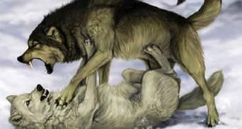 Зрада та перемога опозиції, Або Олігарх олігарху – вовк