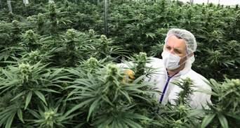 Шанс на повноцінне життя: коли в Україні дозволять використання медичної марихуани