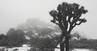 Калифорния засыпало снегом: впечатляющие фото и видео