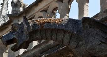 Пчелы, которые жили в Нотр-Даме, выжили во время пожара