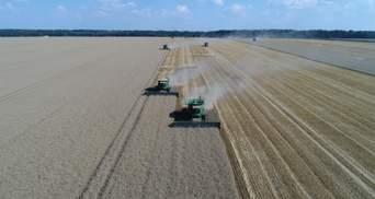 """В """"Укрлендфарминге"""" Бахматюка прогнозируют высокий урожай озимых зерновых"""