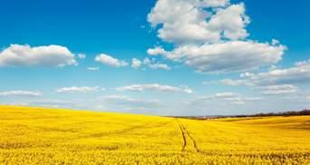 За сколько в Украине продают землю под мораторием и где дороже всего – инфографика