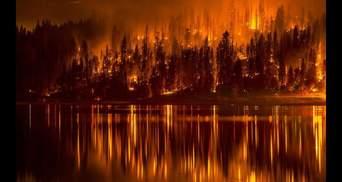 Сколько миллиардов Россия потеряла из-за лесных пожаров
