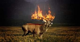 Масштабные пожары в Сибири: сколько лет надо на восстановление лесов