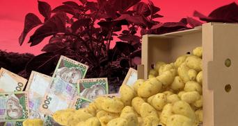Чому українська картопля дорожча за білоруську