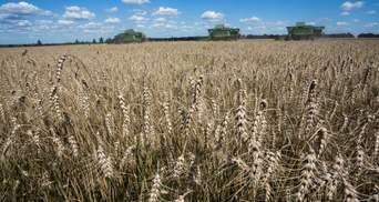 Ukrlandfarming: інновації підвищують врожайність посівів