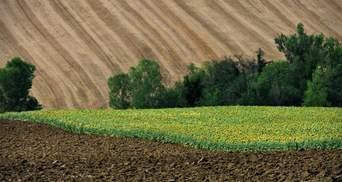 Земельная реформа в Украине: эксперты предупредили о рисках и возможностях